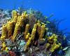 Branching Sponges