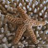 Star Fish<br /> © Pamela Stover<br /> Exposed-Images Photography