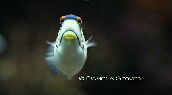 Clown Fish<br /> © Pamela Stover<br /> Exposed Images
