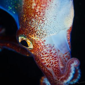 Stubby Squid - Redondo in Des Moines, Washington