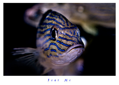 Fish in 3d