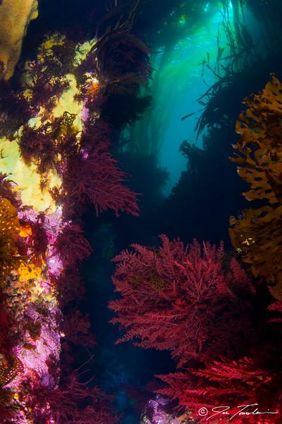 Kelp Corridor