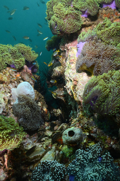 Thai Reef