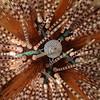 Alien Urchin