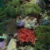Thai Reef II