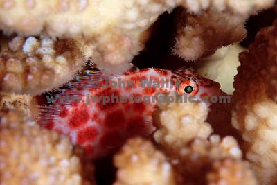 fish coral