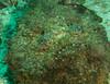 Stonefish.  Highly toxic!