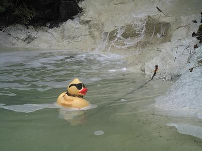 Duckling, Friday Harbor, San Juan Island. June 7, 2013