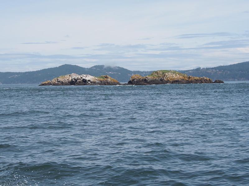 Williamson Rocks, Rosario Strait. June 5, 2013