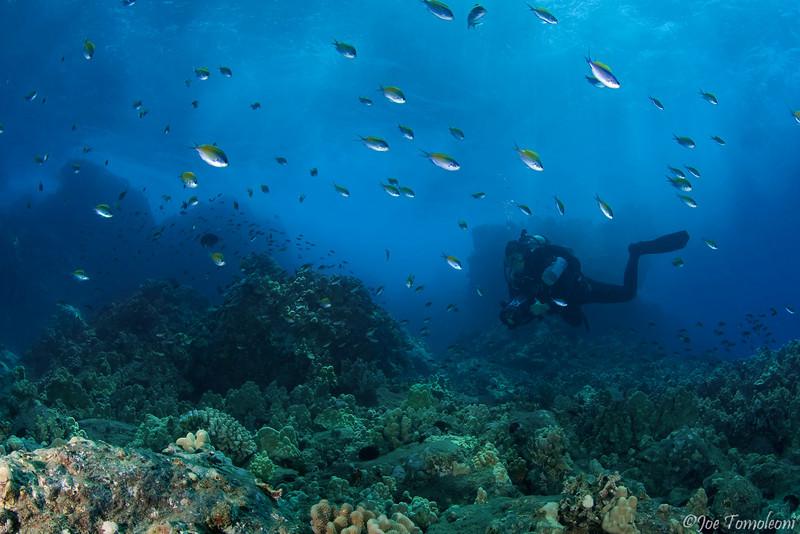 Maui Reefscape