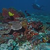 Coral Reef Profile - Flores, Indonesia