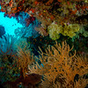 Underwater Marine