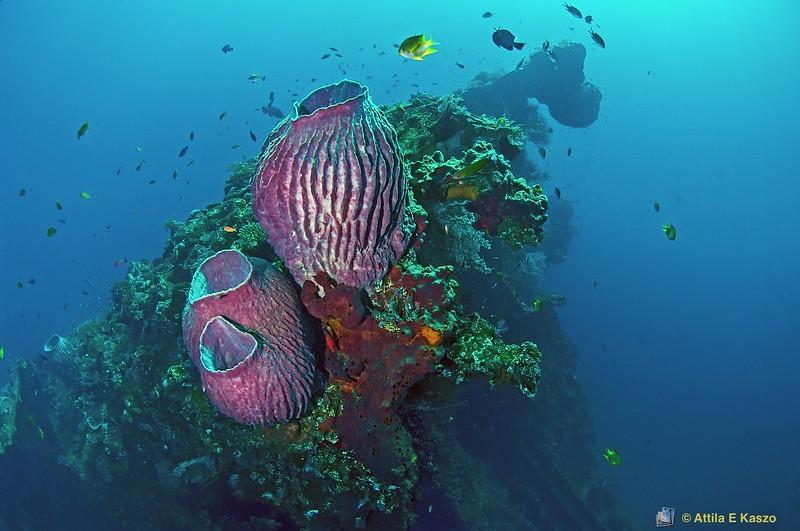 USAT Liberty Shipwreck - 110142, Tulamben, Bali, Indonesia