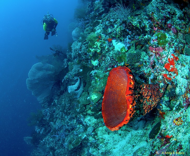 Coral Reef Profile - Menjangan, Indonesia