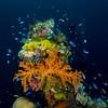 Colorful soft and hard coral on the mast of the Hoki Maru.<br /> Truk Lagoon 2013