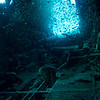 Inside the fuselage of the Betty Bomber.<br /> Lots of small fish.<br /> Truk Lagoon 2013
