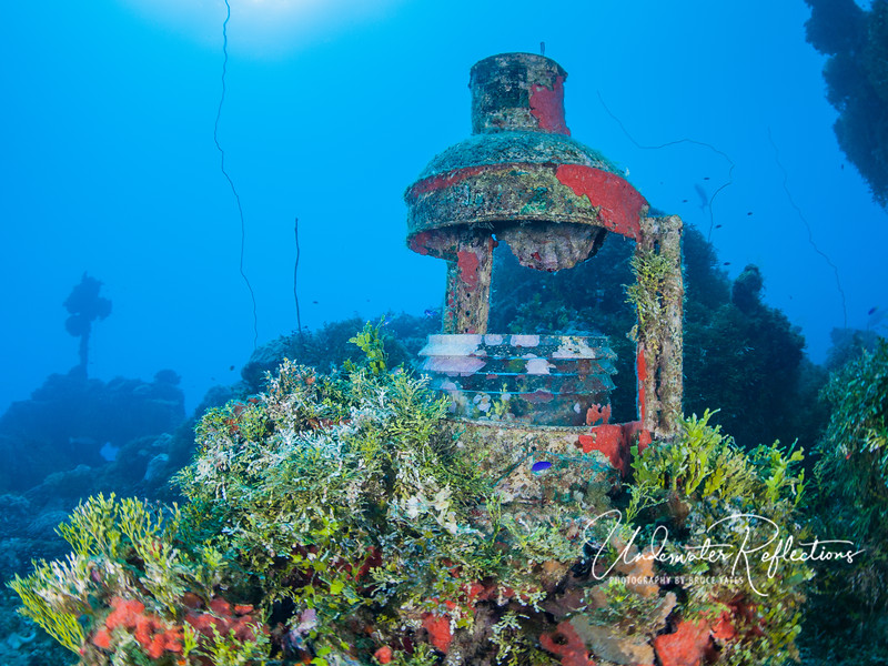 Lantern on deck, among green algaes and orange sponges.