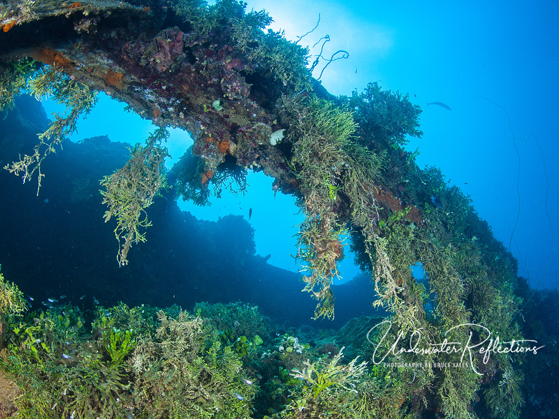 Some wrecks were covered in corals and sponges, but a few were virtually covered in algaes (e.g., caulerpa), which really make it look like a moss-covered forest.  Pretty in a different way.
