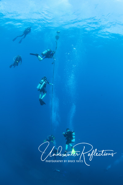 Divers use the mooring line to decompress at the end of their dive.