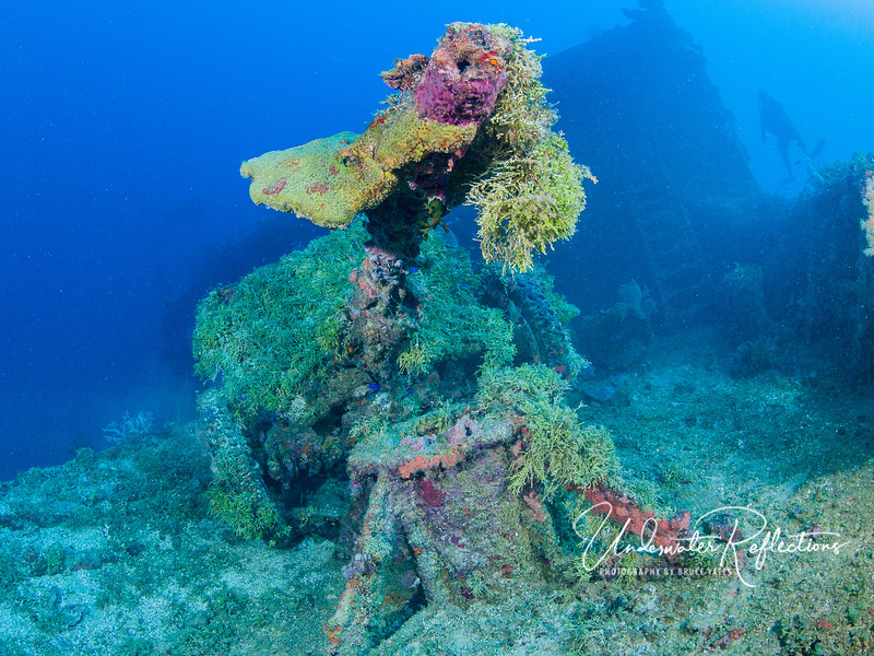 Portable gun on deck.  Note that this gun is covered in a moss-like algae.  Some of the shipwrecks were covered thus, while others were mostly corals and sponges.  I guess it just depends on what could get the best foothold...