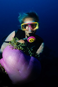 Jeannie Wiseman observes a Pink Anemonefish and its host Anemone on the main deck of the Shinkoku Maru.