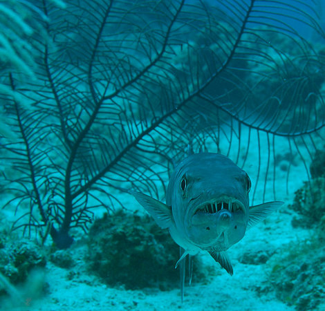 This barracuda has a big smile for us