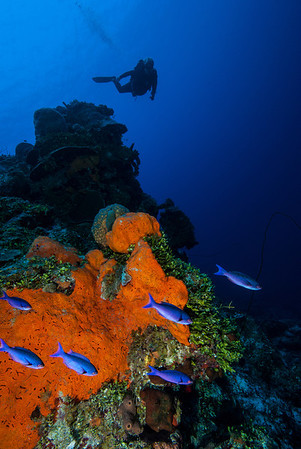 Rock Garden Interlude  Mike Mesgleski poses high above on top of the wall at Rock Garden Interlude. An orange Elephant Ear sponge and a school of Blue Chromis provide a splash of color.   Turks & Caicos