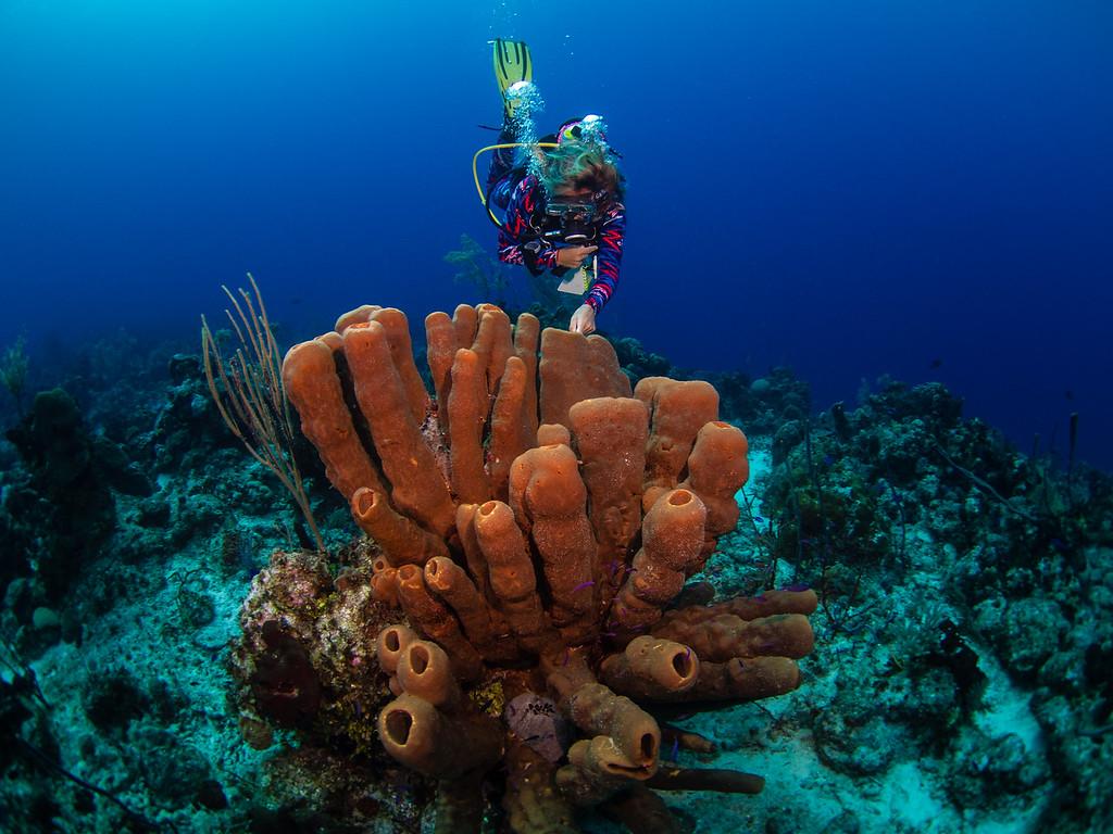 Tube sponge & Dive Master.