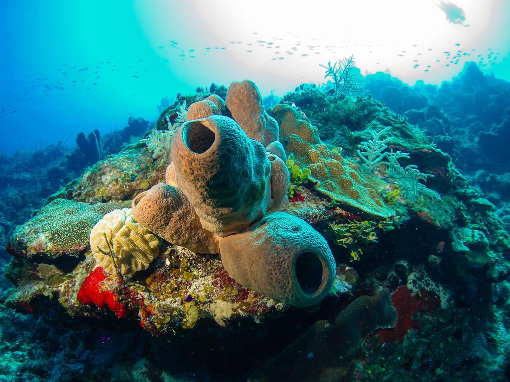 Tube sponges.