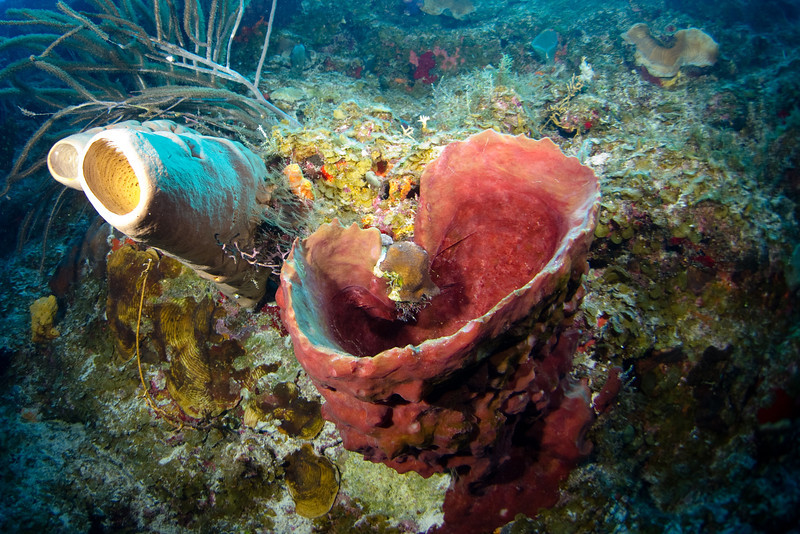 Vase Sponge.