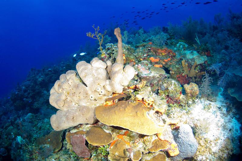 Tube Sponge.