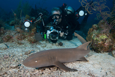 Don Foss photographs a Nurse Shark at a dive site named G-Spot in French Cay.  Nurse Sharks are commonly found resting on sandy bottoms.  Unlike other shark species, they can move water over their gills while at rest.  I took this super-wide angle photo at 10mm - so we were both literally on top of the shark!