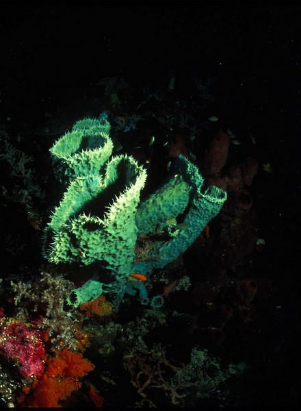 Tubular Sponge