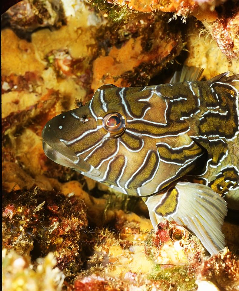 Rocky fish