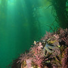 © Joseph Dougherty. All rights reserved. 