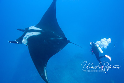 Giant manta ray with Judy (Socorro, Mexico).