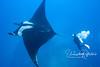 Giant manta ray with Judy (Socorro, Mexico).