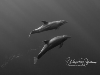 Dolphins in sunlight (Socorro, Mexico).