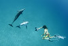 Atlantic Spotted Dolphins (Bahamas)
