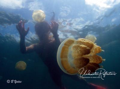 Jellyfish Lake - Palau, Micronesia