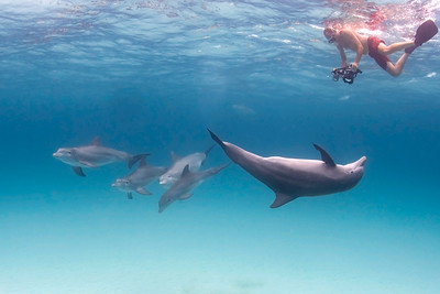 Who is posing for whom?! Bottlenose dolphin (Bahamas) interacts with snorkeler/photographer.