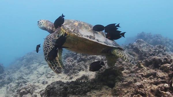 Underwater November 3,2014