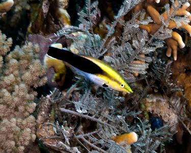 Underwater Philippines REEF trip 2016