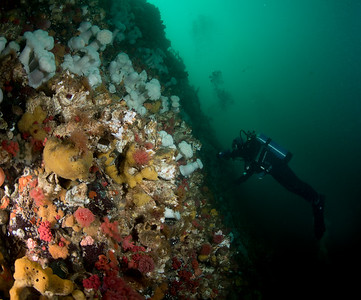 So much splendour. Dive buddy Jacqui Engel near Telegraph Cove BC, CANADA