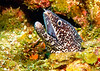 IMG_2016spotted moray