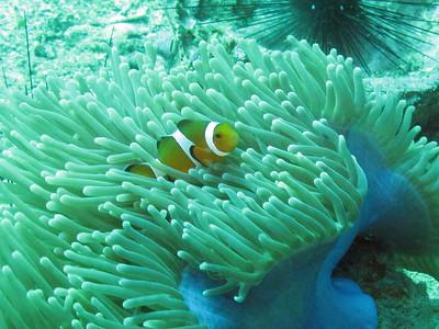 Anemone Reef Phuket Thailand
