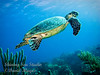 Hawksbill in the sun