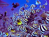Moorea Fish Madness