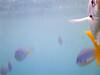 Underwater :