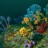 Acideans / Sponges - Seascape, Jervis Bay, Shoalhaven, NSW